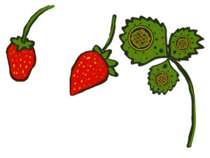 celtic strawberry